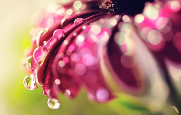 Картинка цветок, капли, макро, блики, боке