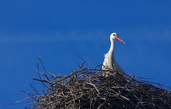 Картинка небо, природа, птица, гнездо, аист