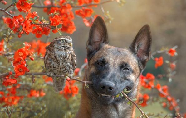 Картинка цветы, ветки, природа, сова, птица, куст, собака, пёс