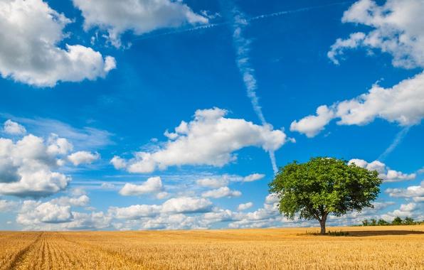Картинка поле, небо, облака, дерево