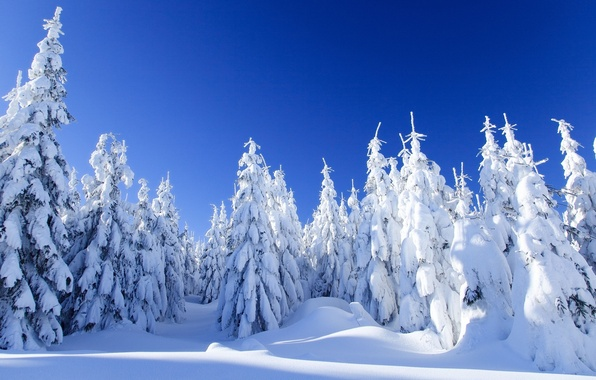 Картинка зима, лес, снег, пейзаж, природа, ель, мороз