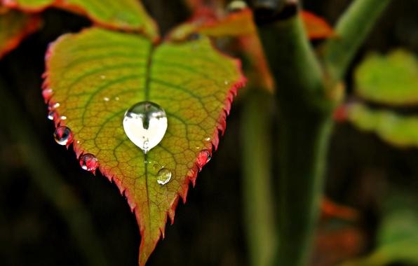 Картинка листья, вода, макро, красный, зеленый, роса, фон, widescreen, обои, капля, размытие, листик, wallpaper, листочек, drop, ...