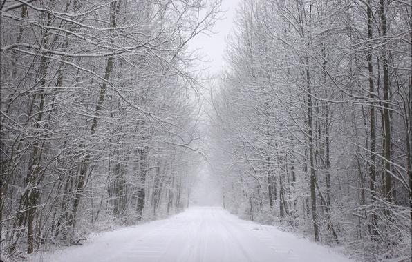 Картинка зима, иней, дорога, лес, снег, деревья, следы