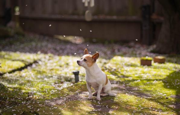 Картинка друг, собака, весна, сад