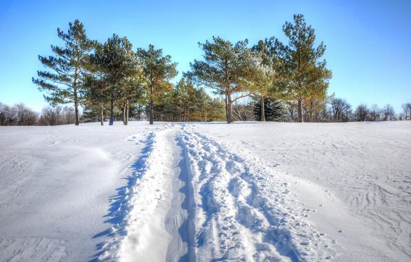 Картинка зима, поле, небо, снег, деревья, след, дорожка