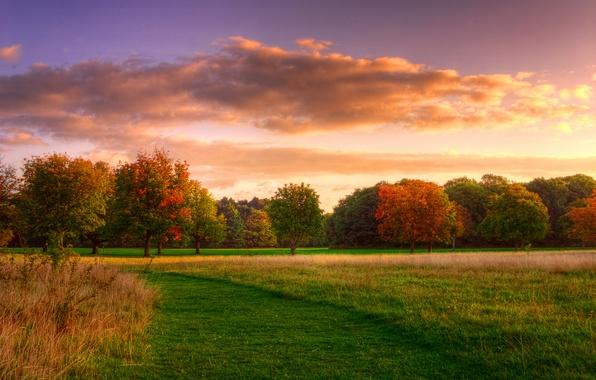 Картинка поле, лес, небо, трава, облака, деревья, природа, восход