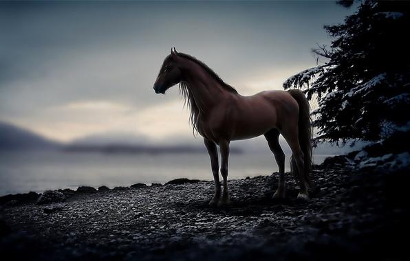 Картинка камни, животное, конь, лошадь, вечер