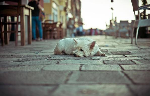 Картинка одиночество, улица, собака
