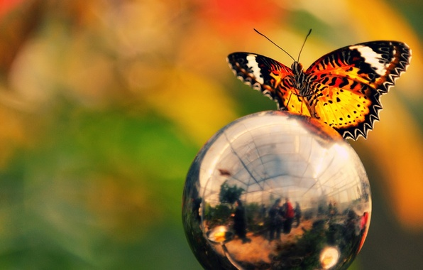 Картинка цвета, отражение, бабочка, шар, яркость