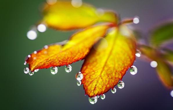 Картинка осень, листья, капли, природа, дождь, rain, nature, autumn, leaves, drops