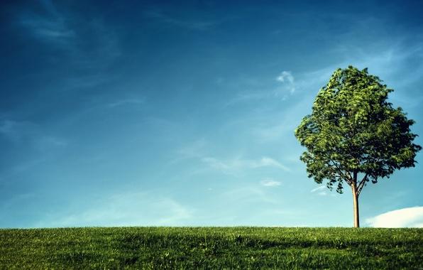 Картинка зелень, небо, трава, листья, облака, ветки, жизнь, дерево, ветер, земля, green, ветви, листва, растения, склон, ...