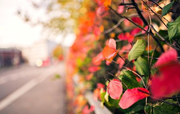 Картинка осень, листья, макро, ветки, красный, зеленый, фон, дерево, розовый, widescreen, обои, размытие, wallpaper, листочки, широкоформатные, …