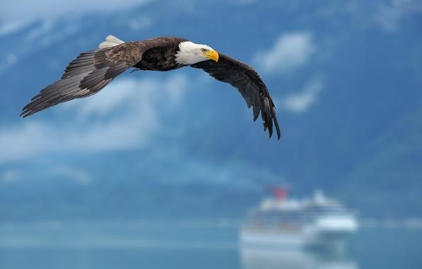 Картинка небо, фон, орел, корабль, крылья, sky, wings, background, eagle, ship