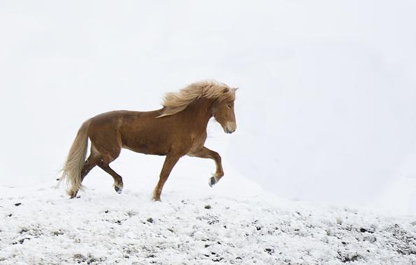 Картинка freedom, winter, snow, horse, wind, freeze, wildlife, frost