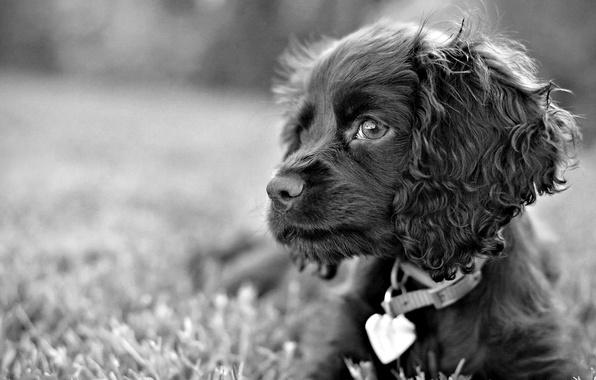Картинка трава, взгляд, черно-белый, собака, пес, грустные глаза