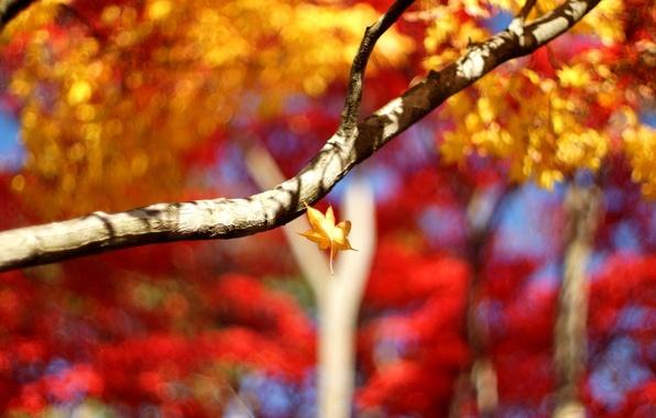 Картинка листья, макро, деревья, фон, дерево, обои, размытие, ветка, листик, wallpaper, листочки, широкоформатные, background, leaves, macro, …
