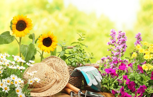 Картинка цветы, фон, widescreen, обои, настроения, ромашки, подсолнух, размытие, шляпа, ромашка, перчатки, wallpaper, цветочки, широкоформатные, background, …