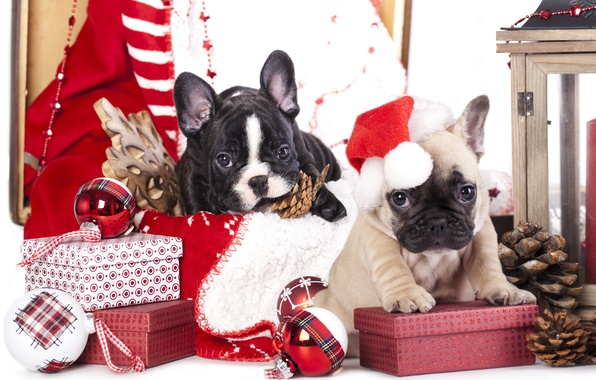 Картинка собаки, шарики, игрушки, щенки, подарки, шишки, снежинка, колпак, коробки, французский бульдог