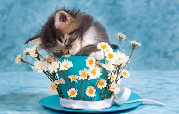 Фото котят и цветов