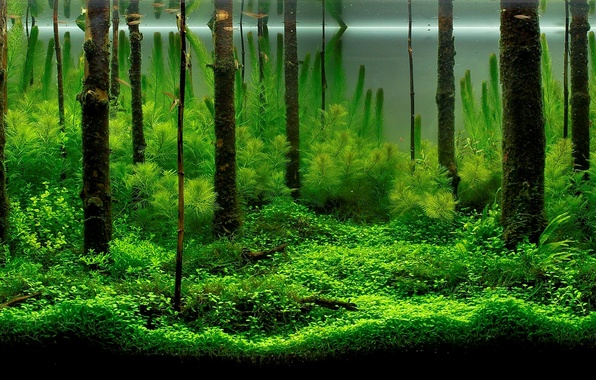 Картинка рыбки, водоросли, аквариум