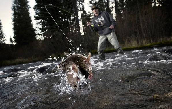 Картинка удача, рыбалка, всплеск, рыба, рыбак, подсечка