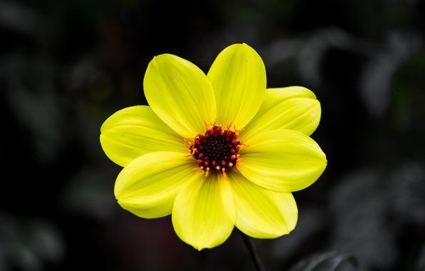 Картинка цветок, природа, фон, лепестки