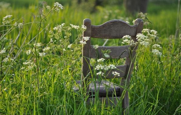 Картинка лето, трава, стул