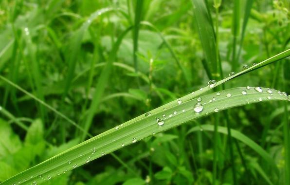 Картинка капли, лист, зеленый, роса