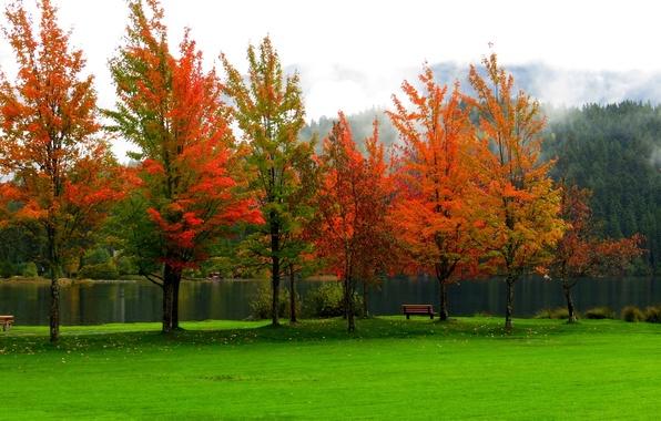 Картинка осень, лес, небо, листья, вода, деревья, горы, скамейка, природа, парк, река, colors, colorful, forest, river, …