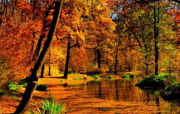 Картинка осень, листья, вода, солнце, деревья, пруд, парк, желтые