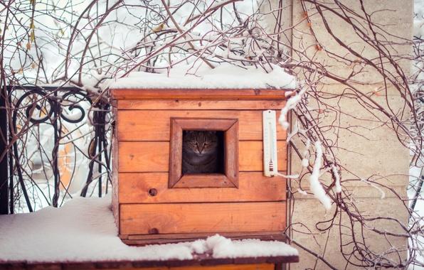 Картинка зима, кошка, кот, взгляд, снег, ветки, природа, ограда