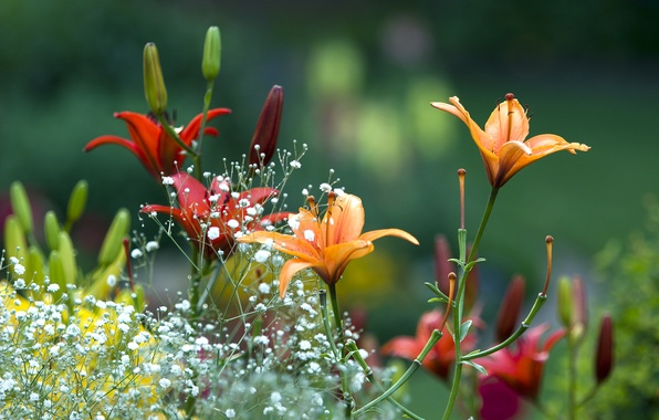 Картинка лето, цветы, лилии, Весна, сад, красиво, summer, flowers, beautiful, Spring, garden, lilies