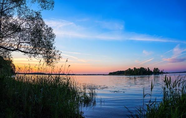 Картинка закат, озеро, камыши, кусты
