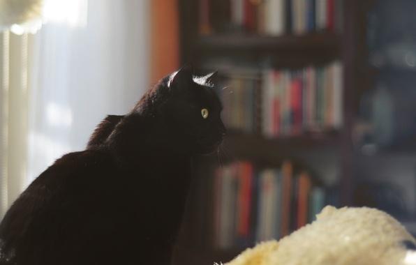 Фото обои кошка, кот, черный