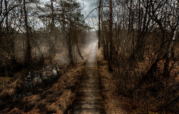 Картинка туман, Осень, дорожка, autumn, fog, path