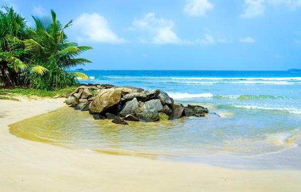 Картинка песок, море, пляж, тропики, пальмы, берег, summer, sunshine, beach, sea, ocean, paradise, vacation, palms, tropical
