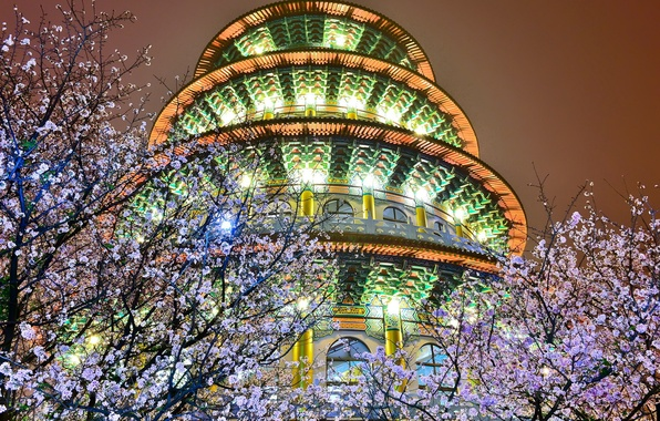 Картинка деревья, ночь, огни, здание, весна, подсветка, цветущие