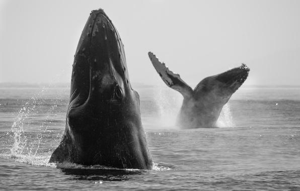 Картинка whales, sea, playing
