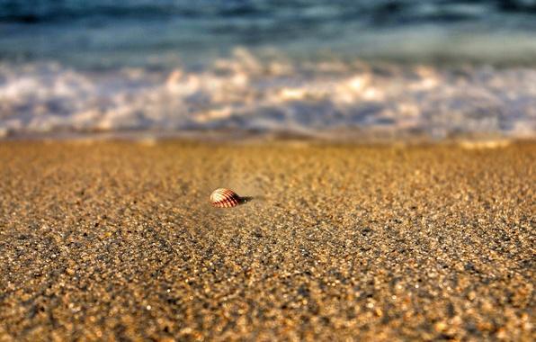 Картинка песок, море, пляж, лето, вода, макро, природа, река, фон, widescreen, обои, размытие, ракушка, wallpaper, sea, …
