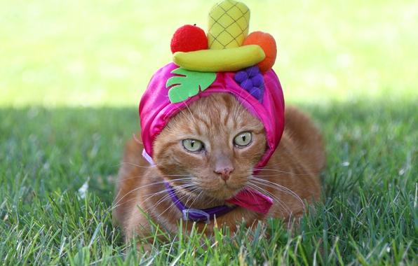 Картинка глаза, кот, взгляд, шапочка