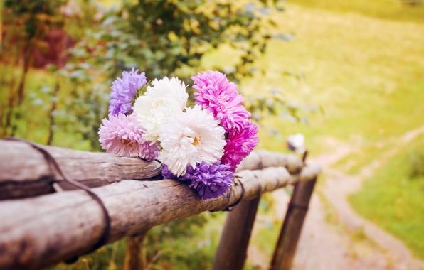 Картинка лето, макро, пейзаж, цветы, природа, фото, мило, красиво, summer, flowers, дача