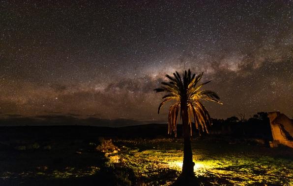 Картинка звезды, ночь, природа, пальма, дерево, млечный путь