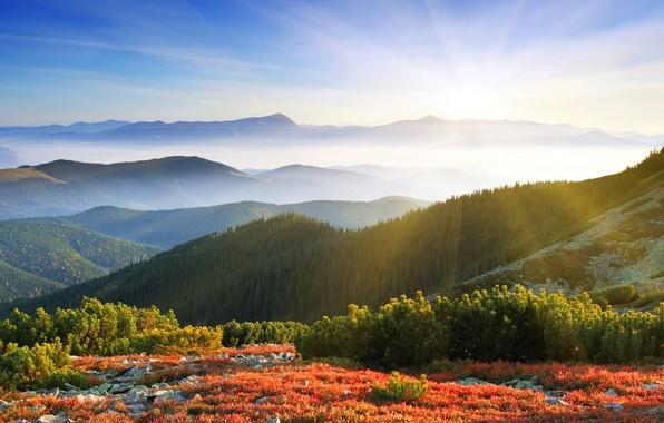 Картинка лес, солнце, лучи, горы, природа, туман, рассвет, утро
