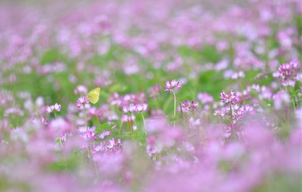 Картинка лето, трава, макро, розовый, легкость, бабочка, поляна, растения, размытость, клевер