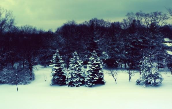 Картинка зима, лес, ёлки