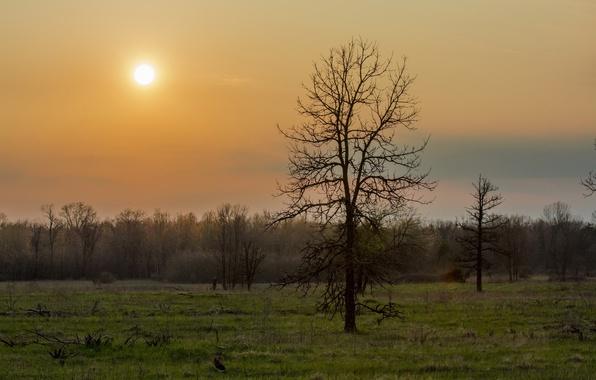 Картинка зелень, трава, деревья, дерево, весна, утро, Лес, ранняя