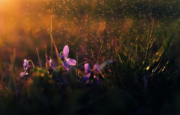 Картинка цветы, дождь, утро