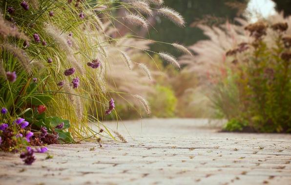Картинка фиолетовый, асфальт, цветы, фон, widescreen, обои, настроения, плитка, wallpaper, колосья, цветочки, широкоформатные, background, полноэкранные, HD …
