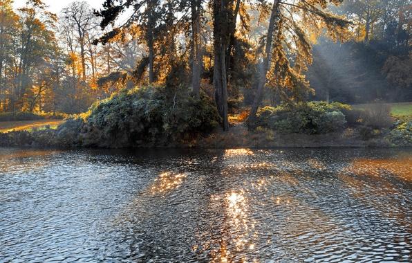 Картинка лес, деревья, пейзаж, природа, озеро, forest, trees, landscape, nature, lake, солнечный свет, sunlight, Осенний парк, …