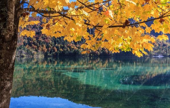 Картинка осень, лес, листья, озеро, дерево, ветка
